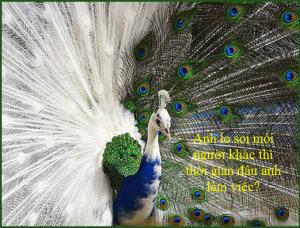 chim phuong hoang